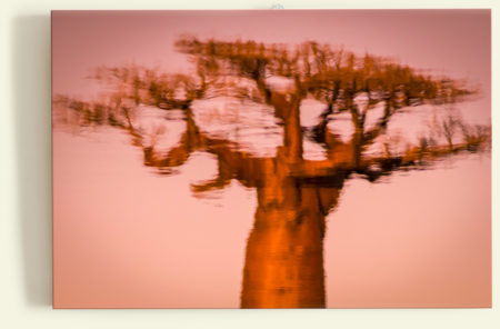 Miroir baobab (Madagascar)