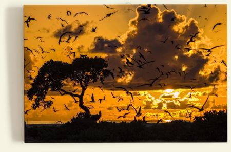 L'envol des sternes (Bird Island, Seychelles)