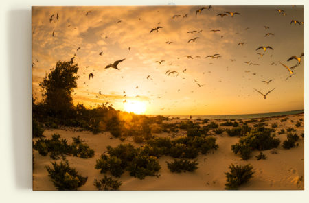 Bird Island (Seychelles)