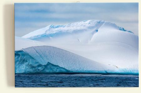Manchots papous sur un iceberg (Antarctique)