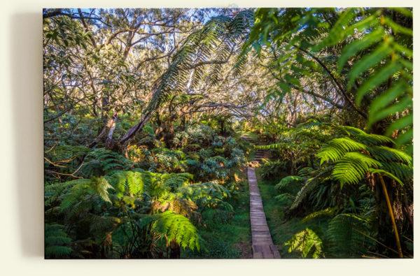 Sur le sentier (La Réunion)