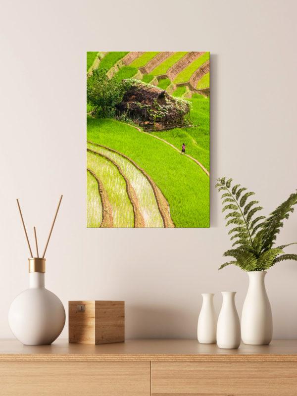 Rizières verticales (Vietnam)
